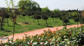 Madrid continúa cubriéndose de verde